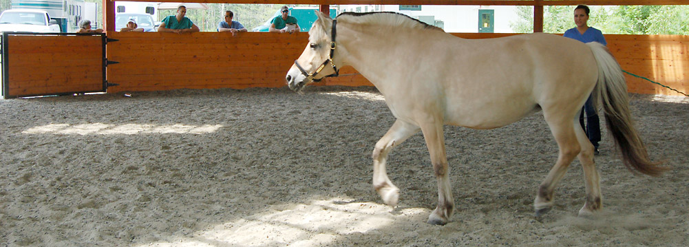 Equine Vaccinations - New England Equine Surgical and